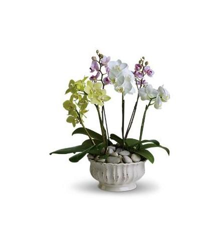 Photo of flowers: Regal Orchid Planter