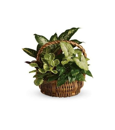 Photo of flowers: Emerald Garden Basket