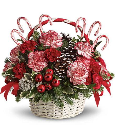 Photo of flowers: Candy Cane Christmas