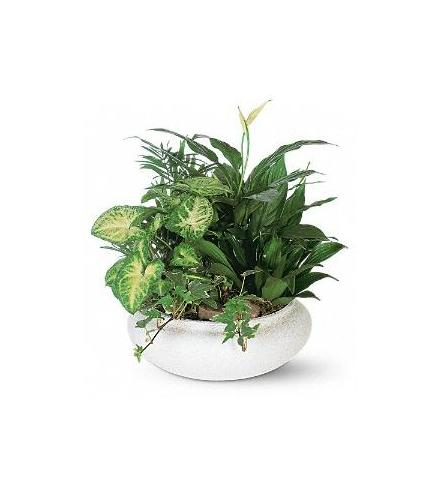 Photo of flowers: Dish Garden Mixed Planter T212-2