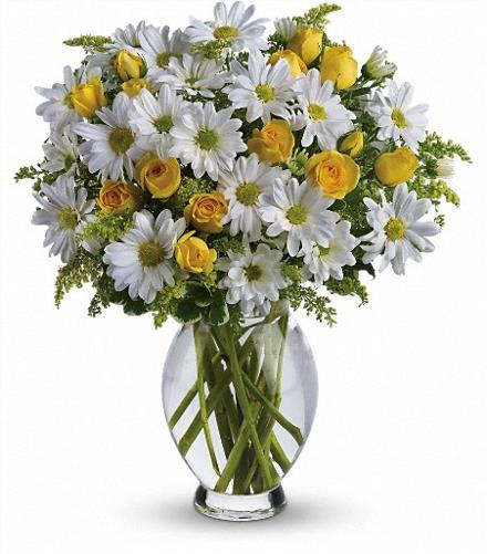 Photo of flowers: Teleflora's Amazing Daisy in Vase