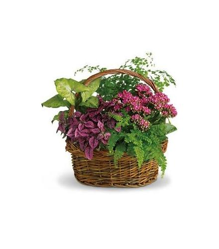 Photo of flowers: Secret Garden Planter Basket T96-2