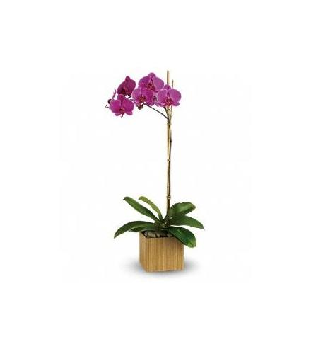Photo of flowers: Purple or White Orchid in suitable container