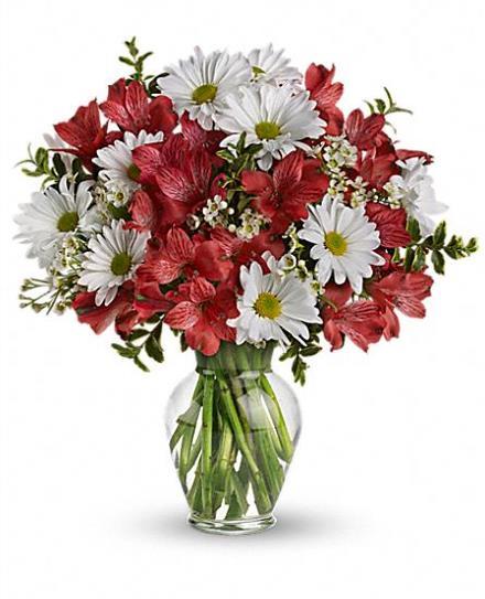 Photo of flowers: Dancing in Daisies