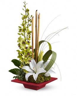 Photo of Secret Oasis Orchids - TEV12-1