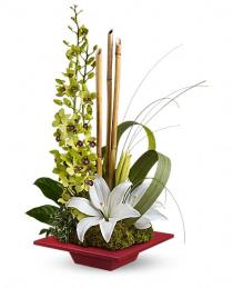 Photo of flowers: Secret Oasis Orchids