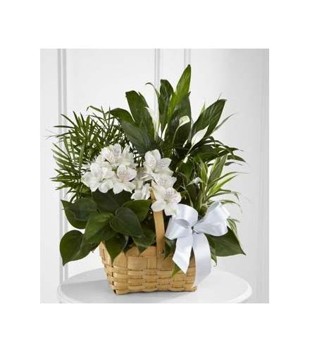 Photo of flowers: Peace & Serenity Planter