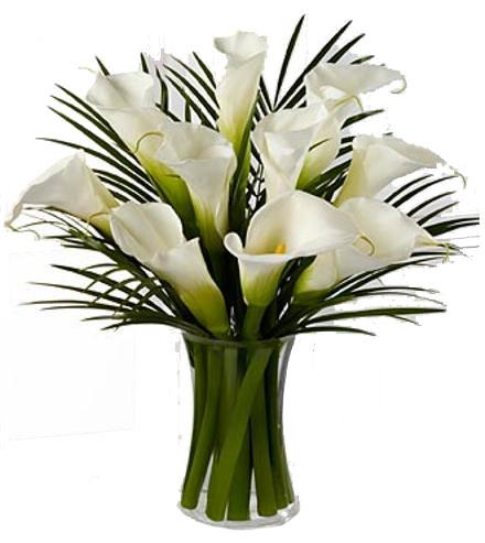 Photo of flowers: Endless Elegance Calla Lily Vase