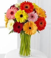 Photo of Colorful World Gerbera Daisy Bouquet - F859