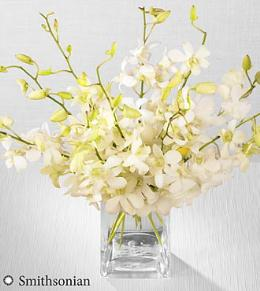 Photo of flowers: White Whispers Dendrobium Orchid Bouquet