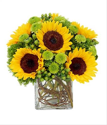 Photo of flowers: Sunflower Surprise