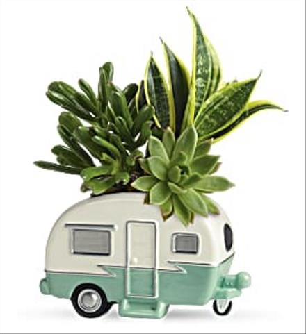 Photo of flowers: Cool Camper Succulent Trailer