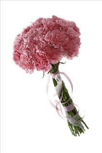 Photo of Carnations Gift Wrapped  - IC-5112