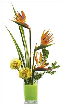 Photo of flowers: Tropical Bright Arrangement