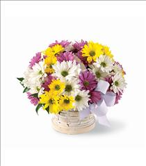 Photo of Sunny Skies Daisy Basket Bouquet - N4-4322
