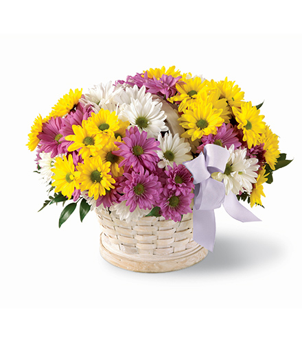 Photo of flowers: Sunny Skies Daisy Basket Bouquet