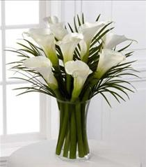 Photo of Always Adored Calla Lilies - S11-4461