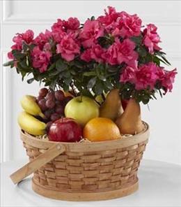 Photo of flowers: Encircling Grace Fruit & Plant Basket