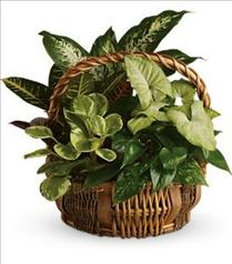 Photo of flowers: Emerald Garden Basket