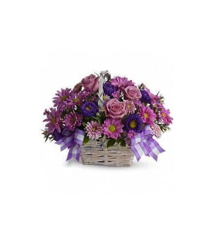 Photo of flowers: Daisy Daydreams