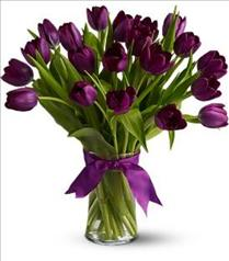 Photo of Passionate Purple Tulips - T148-2