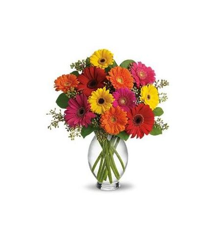 Photo of flowers: Gerbera Brights in Vase