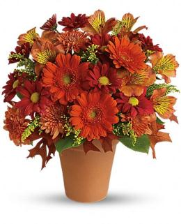 Photo of flowers: Golden Glow in Available Container