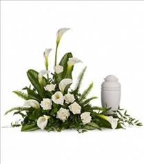 Photo of Stately Calla Lilies - T217-1