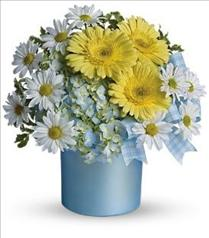 Photo of Teleflora's Once Upon a Daisy - T34-1
