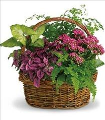 Photo of Secret Garden Basket - T96-2